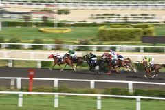 Racing Horse in Competition Motion Pan royalty free stock image