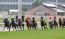 Racing horse in Hongkong. Photo took in Hongkong Jockey club, Shatian field horse racing game in Oct 25, 2015 Royalty Free Stock Photos