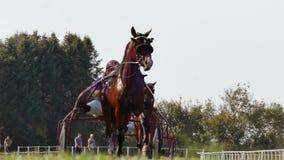 Racing Horse With A Jockey. Backa Palanka ; Serbia ; 09/27-29/2019. Studs Karadjordjevo ;   Serbian Cup Harness horse- Racing Horses Trots On A Track Of Stadium stock footage