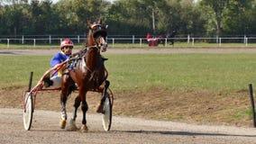Racing Horse With A Jockey On A Track. Backa Palanka ; Serbia ; 09/27-29/2019. Studs Karadjordjevo ;   Serbian Cup Harness horse- Racing Horses Trots On A Track stock video
