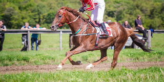 Racing horse portrait in action Royalty Free Stock Image
