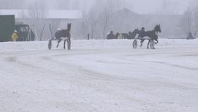 Racing horse train in hippodrome at cold white winter day. 4K stock footage
