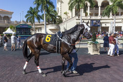 Racing Horses at the Gulfstream Park, Florida. Hallandale Beach, Fl, USA - March 11, 2017: Racing horses show at the Gulfstream Park race track in Hallandale Royalty Free Stock Photos