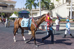 Racing Horses at the Gulfstream Park, Florida. Hallandale Beach, Fl, USA - March 11, 2017: Racing horses show at the Gulfstream Park race track in Hallandale Royalty Free Stock Images