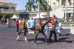Racing Horses at the Gulfstream Park, Florida. HALLANDALE BEACH, USA - MAR 11, 2017: Racing horses show at the Gulfstream Park race track in Hallandale Beach Royalty Free Stock Photography