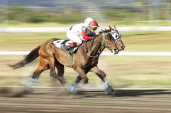 Racing horses Stock Photo