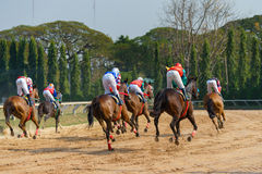 Racing horses starting a race Royalty Free Stock Image
