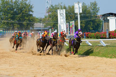 Racing horses starting a race Royalty Free Stock Images