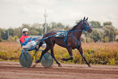 Racing for the horses trotting breeds Stock Images