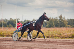 Racing for the horses trotting breeds Royalty Free Stock Photo