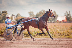 Racing for the horses trotting breeds Stock Photography