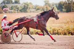 Racing for the horses trotting breeds Royalty Free Stock Photos
