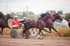 Racing for the horses trotting breeds Stock Photo