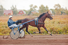Racing for the horses trotting breeds Royalty Free Stock Image