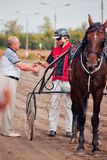 Racing for the horses trotting breeds Stock Image