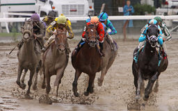 Racing on a Muddy Track. SARATOGA SPRINGS, NY - AUG 29: A field of thoroughbred horses heads down a muddy homestretch at Saratoga Race Course, Saratoga Springs royalty free stock photography