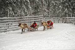 Racing on the reindeer sledges Stock Image