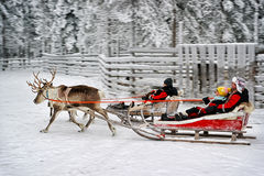 Racing on the reindeer sledges Stock Photography