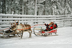 Racing on the reindeer sledges Stock Photos