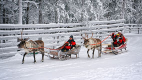 Racing on the reindeer sledges3 Royalty Free Stock Image