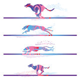 Racing and running dogs Stock Image