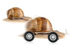 Racing snail on wheels. Snail on wheels dashing past another snail, concept shot suitable for various fields Royalty Free Stock Images
