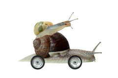 Racing snails Royalty Free Stock Photography