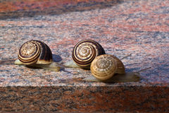 Free Racing Snails Royalty Free Stock Photography - 44800677