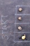 Racing snails close-up Stock Photos