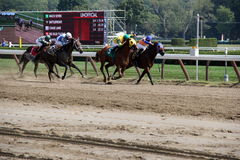 Racing to the finish line,Saratoga Race Track,New York,2015 Stock Photos