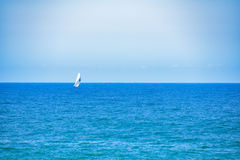 Racing yacht. A yacht in the ocean Stock Images