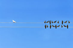 Racism concept, White and Black birds on wire Stock Image