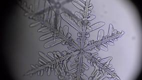 Rack focus of snowflake in microscope.  stock video