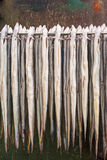 Rack with fresh smoked eel in The Netherlands Stock Photography