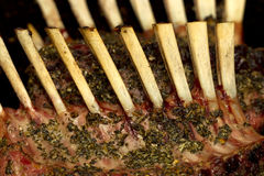Rack of Lamb ribs Stock Images