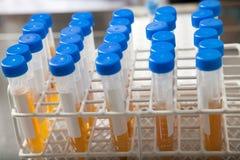 Rack Of Test Tubes Royalty Free Stock Photo