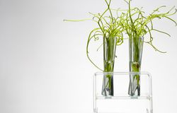 Rack of test tubes with small plants Royalty Free Stock Images