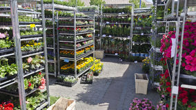 Racks with flowers at a week market. At Vetlanda, Sweden royalty free stock photography