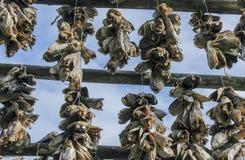 Racks full of dried codfish Royalty Free Stock Photo