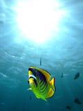 racoon рыб бабочки Стоковое фото RF