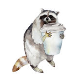 Racoon with coffee mug, animal character isolated on white background. Racoon with coffee mug, animal character isolated on white background watercolor stock illustration