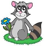 Racoon dos desenhos animados com flor Imagens de Stock Royalty Free