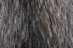 Racoon fur texture Royalty Free Stock Photo