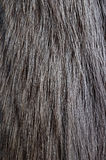 Racoon fur texture Stock Photo