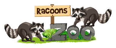 Racoons at the zoo sign Royalty Free Stock Image
