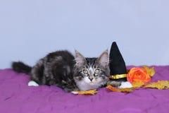 Racum pequeno de maine do gatinho que encontra-se para baixo ao lado de um chapéu da bruxa e de uma flor alaranjada para o partid fotos de stock royalty free
