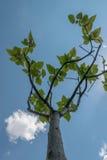 Racursi drzewo Zdjęcie Royalty Free