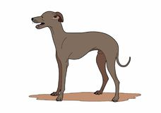 Racy dog. Vector illustration of a pet, file EPS 8 Stock Photo