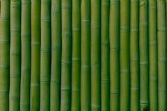 Rad av bambu för grön färg som vertikalt lokaliseras royaltyfria foton