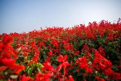 Rad av blommor Royaltyfri Fotografi
